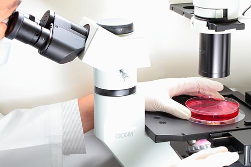 顕微鏡観察イメージ